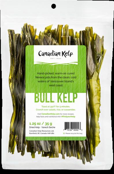 Bull-Kelp